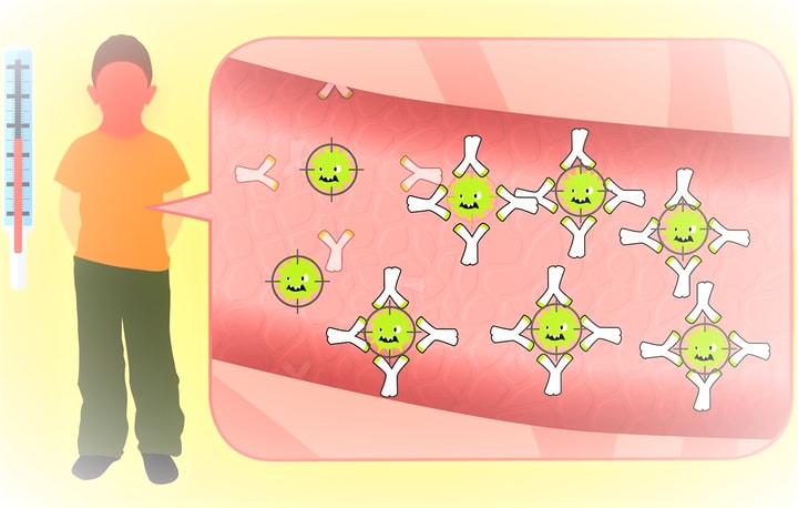 image showing how immune system works, difference between active and passive Immunisation.