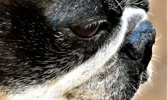 STRESS IN DOGS: SIGNS AND TRIGGERS.