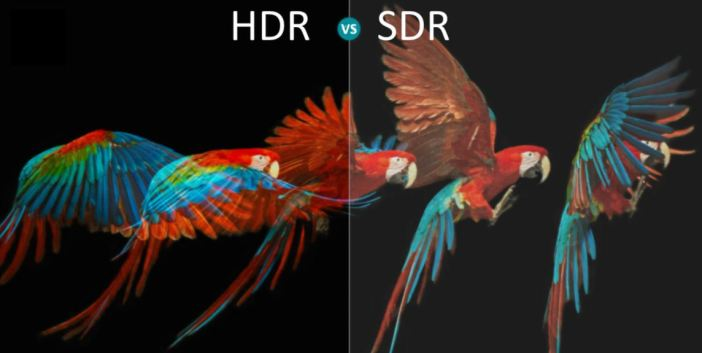 A parrot in HDR vs SDR view