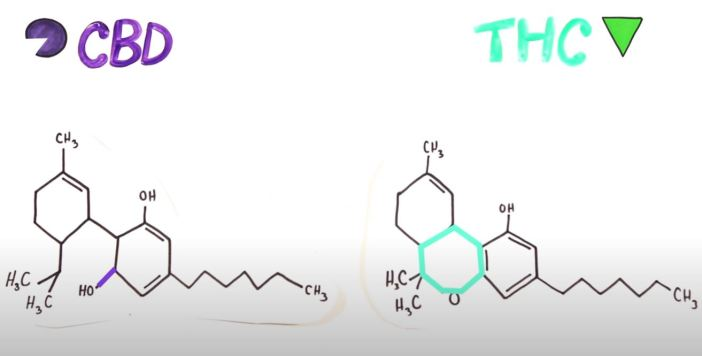 CBD and THC molecules comparison