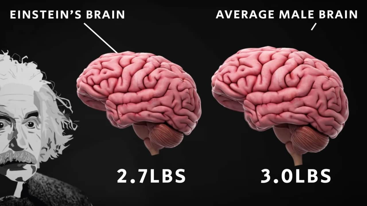 Picture showing how Einstein's brain is different from a normal brain
