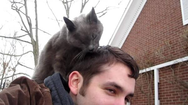 A cat sitting on a man's shoulders and licking his hair