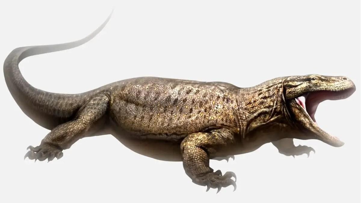Types of lizards, very big lizard.
