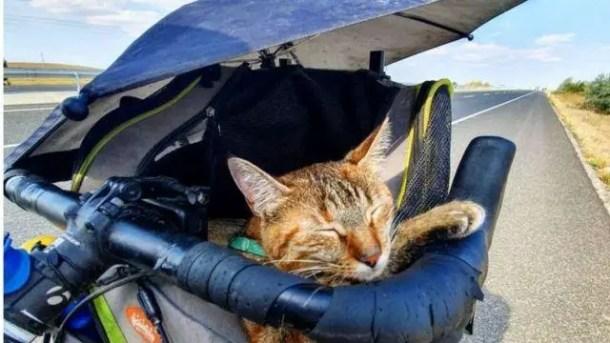 A cat, a bike and a road.