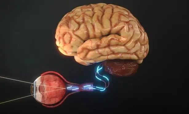 Function of the human eye.