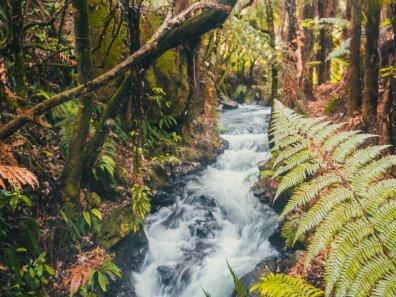 New Zealand waterfall Ecosystem