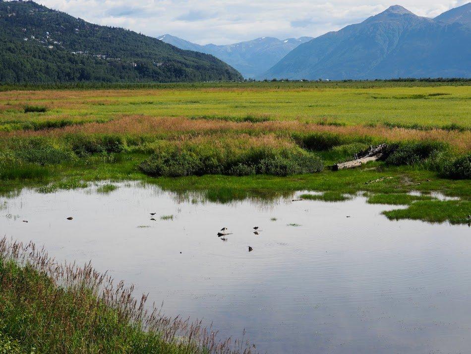 Potters marsh freshwater ecosystem
