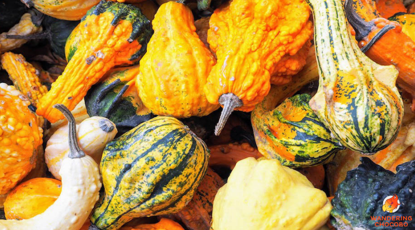 Worlds largest pumpkin festival Ludwigsburg Germany Autumn Things to do in Europe