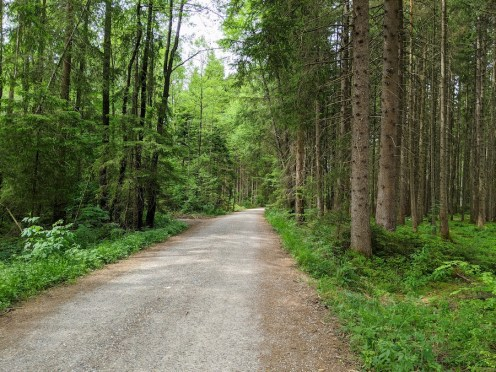 Murnauer Moos Forest Trail