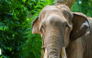 Asian Elephant India Wildlife Diary