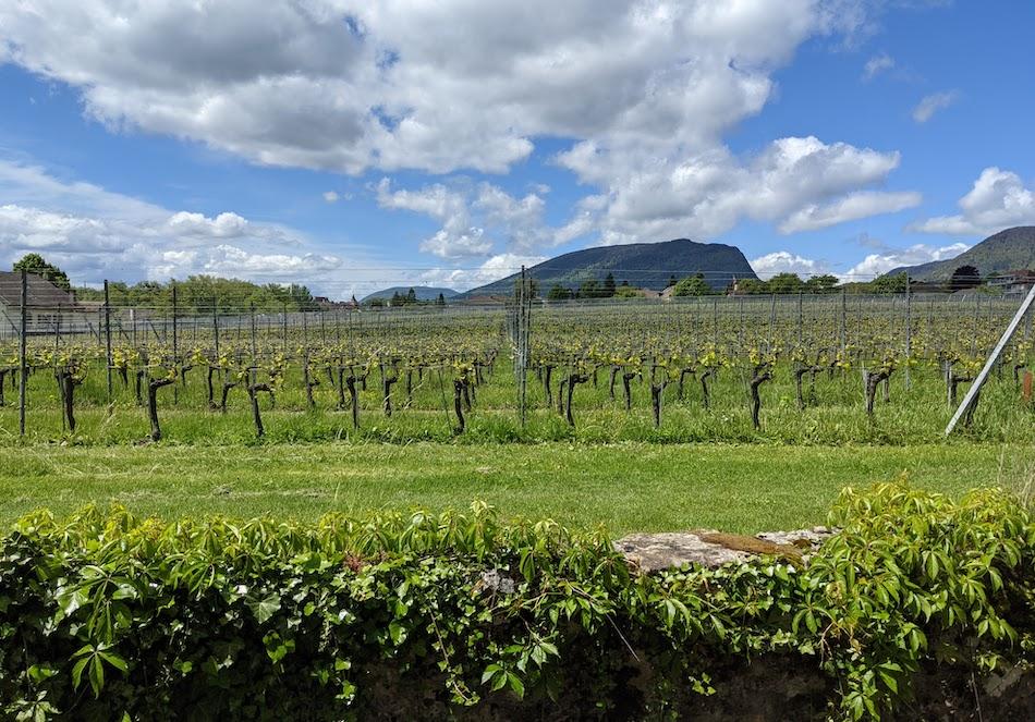 Switzerland Campervan Road Trip Neuchatel vineyards