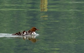 Weissenau nature reserve bird watching