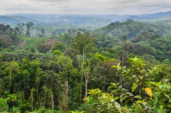 Nearly 20% of tropical forests threatened by overlapping extractive industries