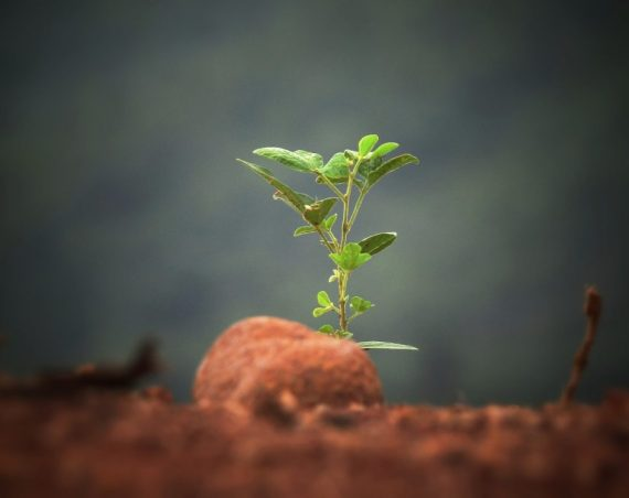 Lets get grounded – why soils are underrated and disappearing!