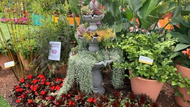 Photo of Hidden Children's Garden at the Epcot International Flower & Garden Festival