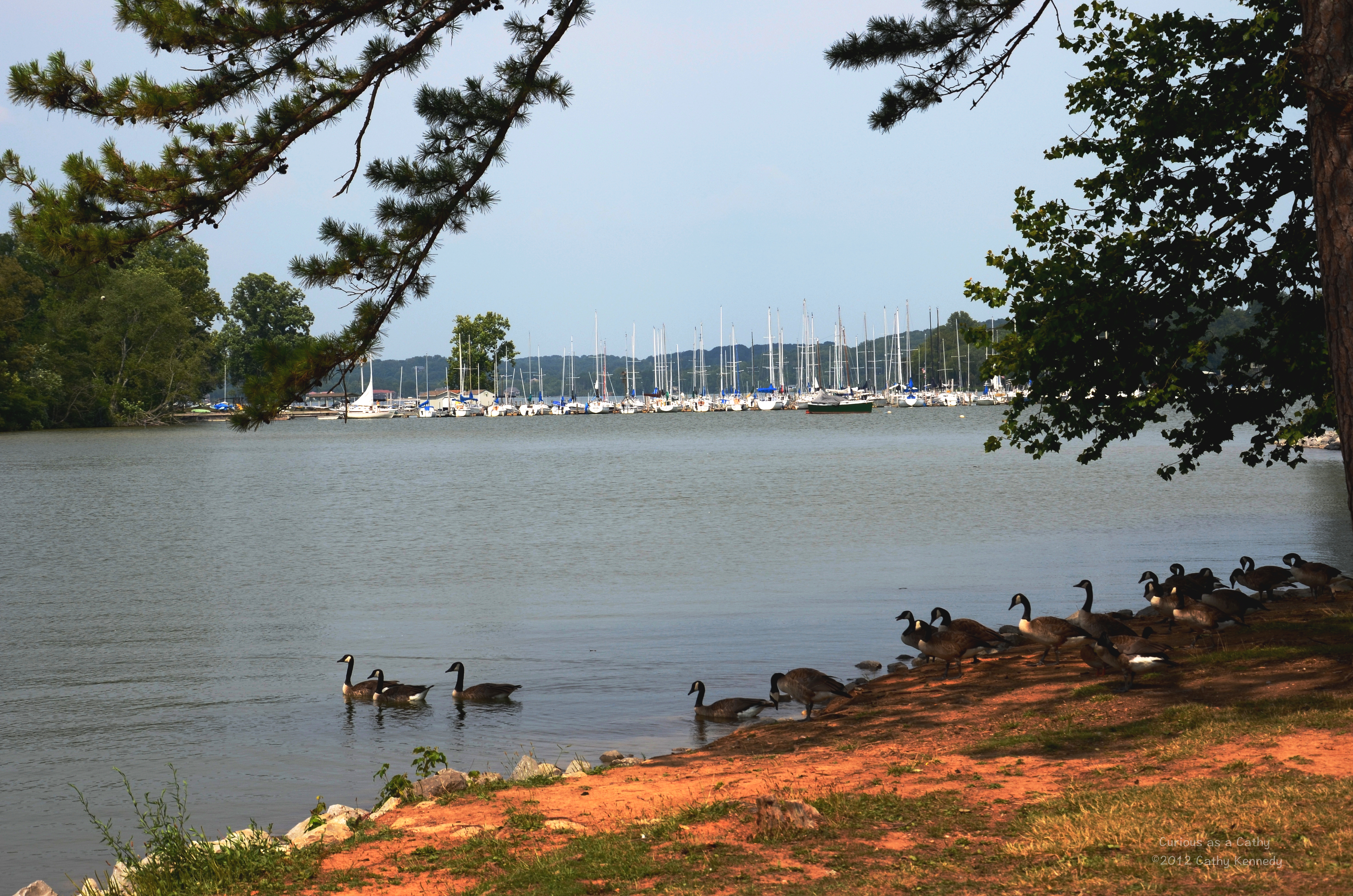 fort loudon singles Fort loudoun lake under $500,000 | norris lake lakefront real estate, norris lakefront property for sale, norris lake homes, condos and lots for sale norris lake front communities for sale.