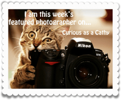 WW featured photographer