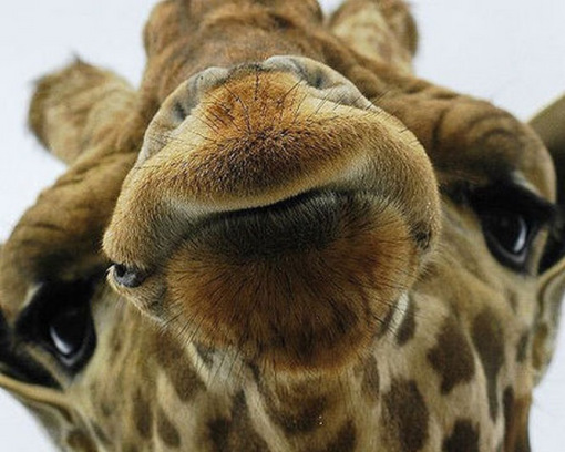 The-World's-Top-10-Best-Animal-Selfies-2