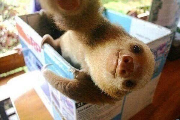 animal-selfies8