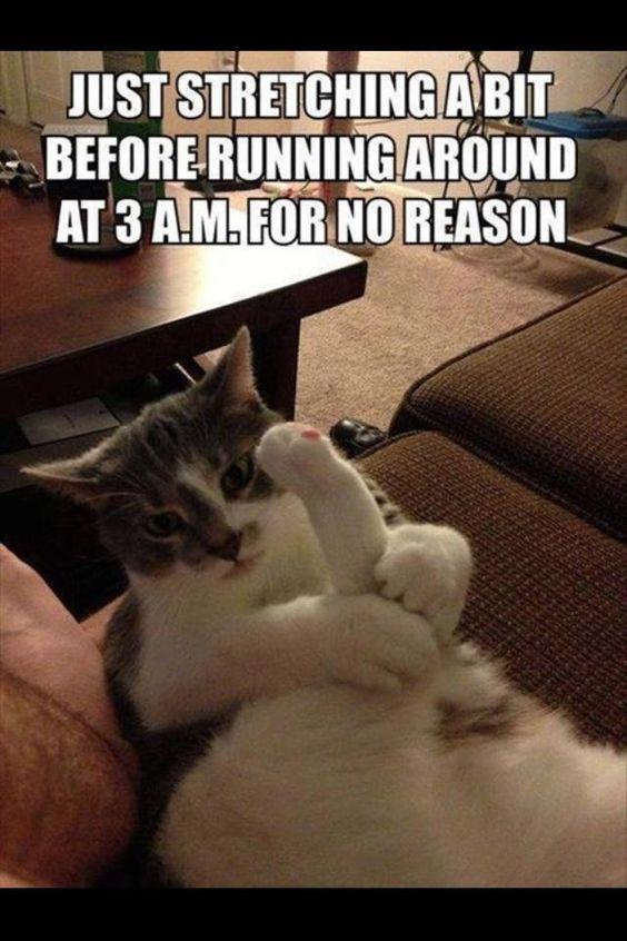 cat-humor