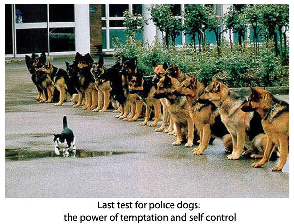 policedogtest