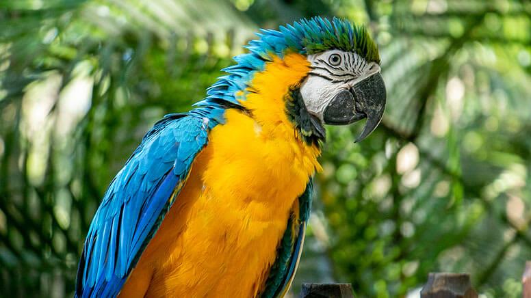 Brisbane Day Trips - Currumbin Wildlife Sanctuary