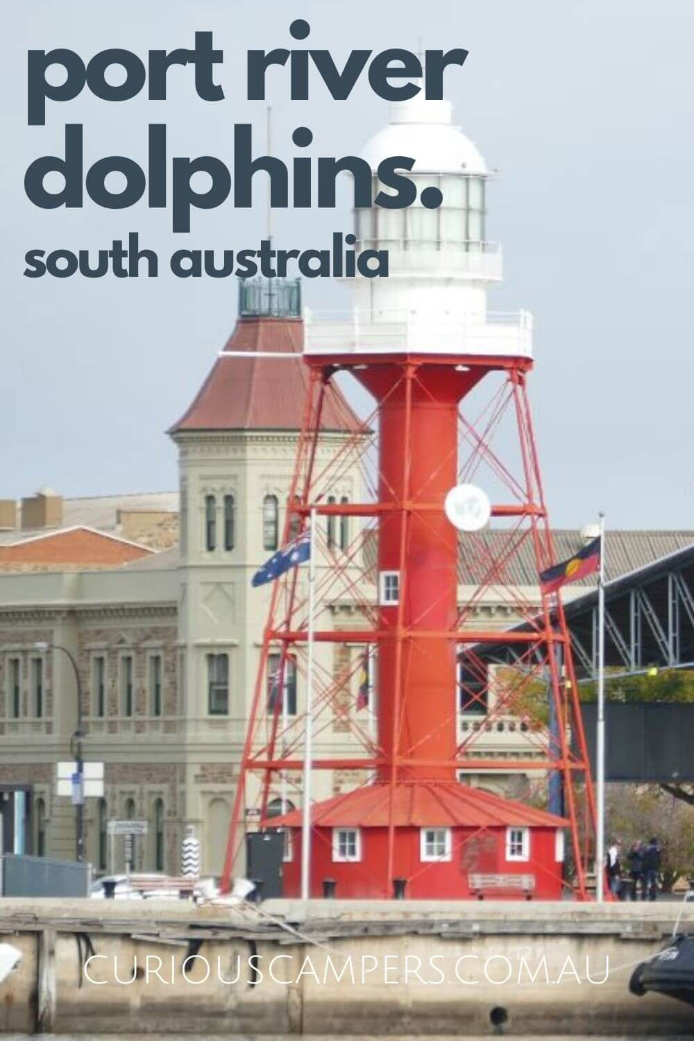 Port Adelaide Dolphin Cruise
