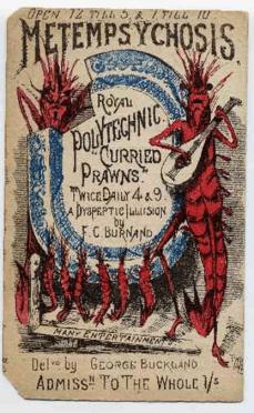 The Polytechnic Regent