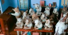 Walter Potter: Rabbits' School, 19th century (photo: Errol Fuller)