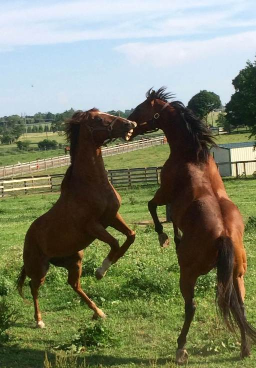 Kentucky - Old-Friends.jpg
