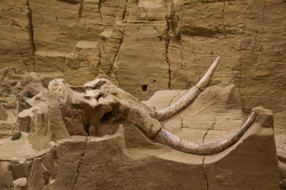 Curious Craig - Mammoth-Skull.jpeg