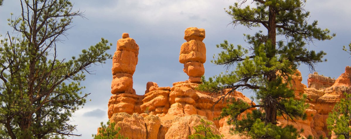 Curious Craig - Red-Canyon-Towers-and-Trees.jpeg