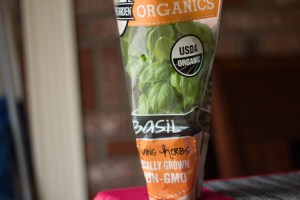 Grocery Store Basil Plant Image