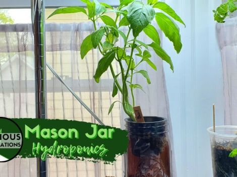 Mason Jar Hydroponics