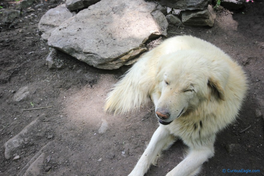 This local dog was giving a company to trekkers and he came all the way till Har Ki Dun!