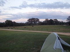 Campsite at the Ranch
