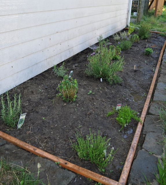 Shed herb bed