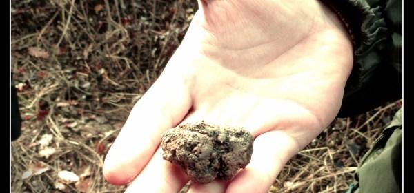 hand w one truffle