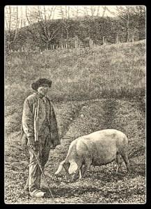 truffle hunter w pig