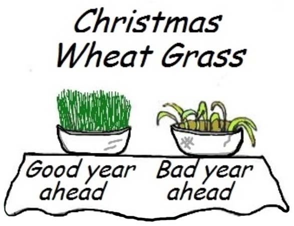 13 desserts christmas wheat grass