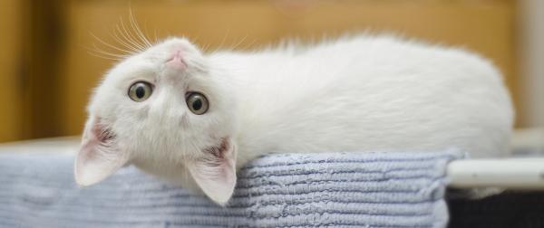 kitten-1285341_1280