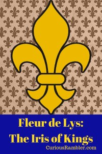 Fleur de Lys_The Iris of Kings