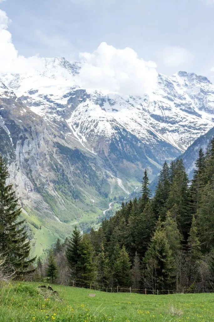 Alpine meadow and Bernese Alps