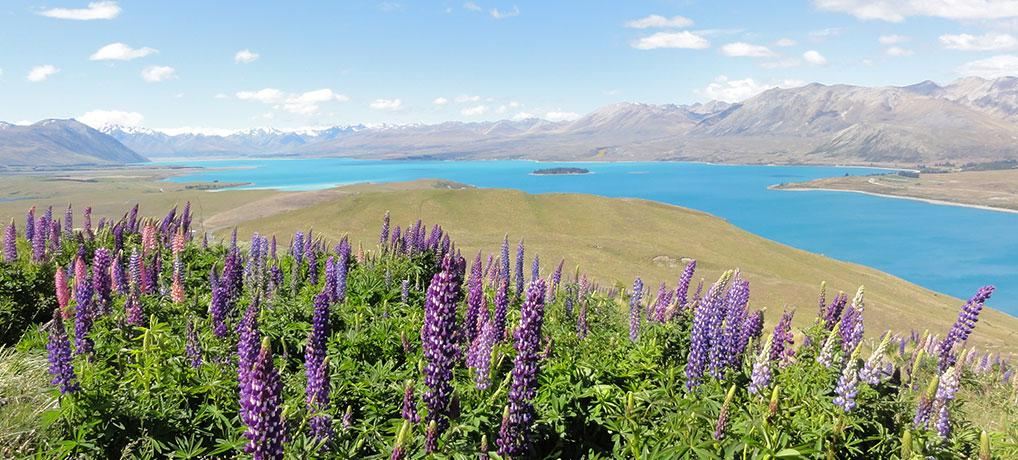 ALL ABOUT WORKING HOLIDAY IN NEW ZEALAND