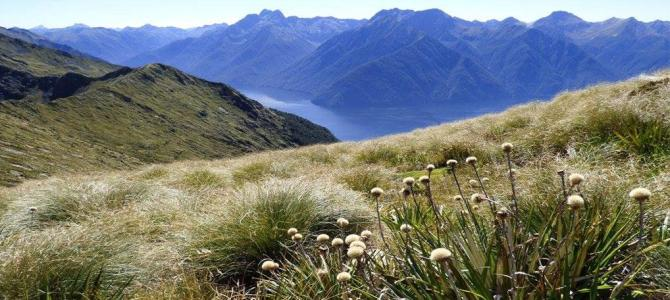 NEW ZEALAND GREAT WALKS: THE KEPLER TRACK