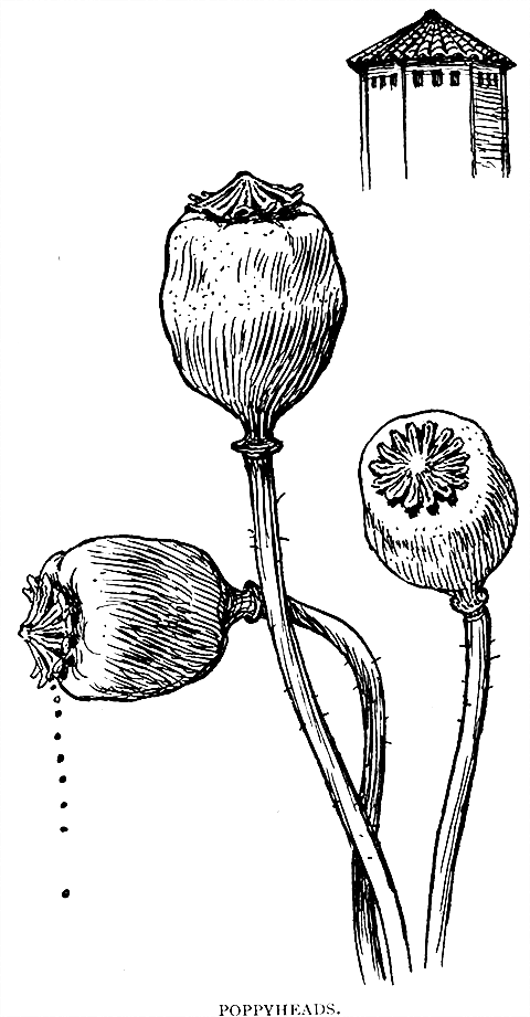 CurkovicArtUnits / Line Drawing Examples