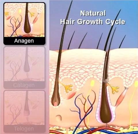 Natural Hair Growth Cycle