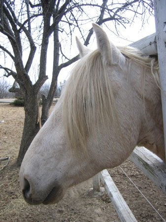 straight curly horse