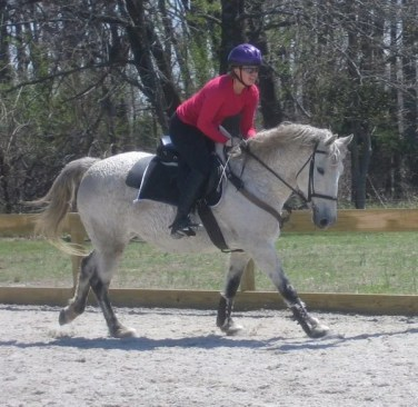 curly horses make versatile mounts