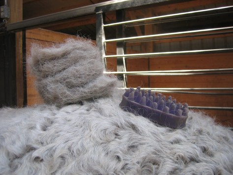 horse hair from a curly winter coat